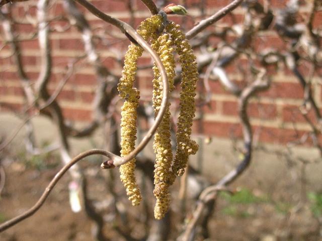 lauder-pollen.jpg