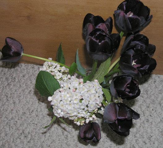 tulips6.JPG